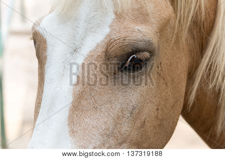 Horse Face In The Park