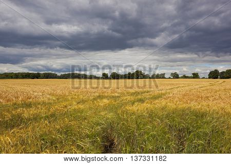 Dramatic Skies Over Barley Field
