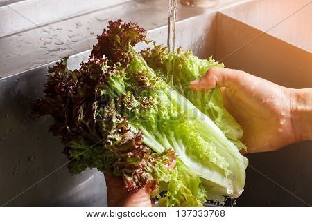 Man's hands washing lettuce leaves. Water flowing on red lettuce. Part of vegetarian snack. Fresh gift of nature.