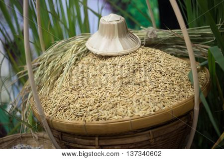 Yellow Rice In Basket