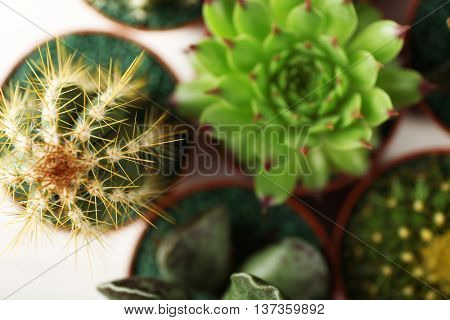 Different succulents and cactus in pots, top view