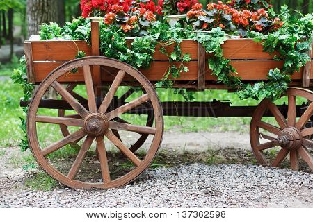 The cart with flowers. Scarlet red geranium flowerbed in retro styled old wooden wagon. Cranesbill in park landscape design, modern landscaping