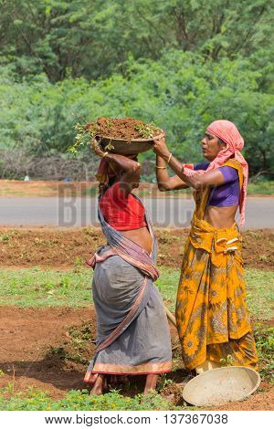 Chettinad India - October 18 2013: In Soorakudi hamlet a group of women employed in the NREGA scheme clean the side of the road. One woman puts a basin with dirt on top of the head of other woman.