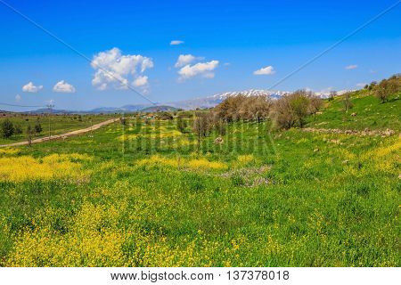 Flowering Golan Heights in a beautiful sunny day. On the horizon is visible snowy peak of Mount Hermon