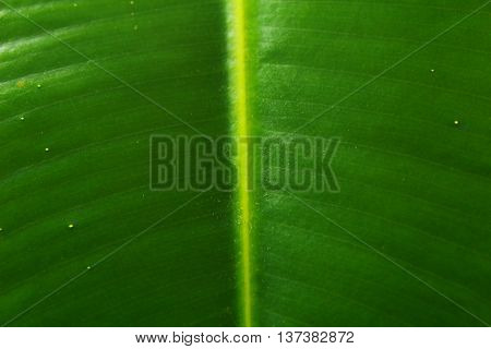 Texture Of Green Leaf Light Background, Closeup