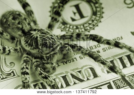 Green tint macro shot of spider on dollars bill