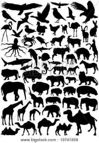 Sammlung von tierischen Vektor 2