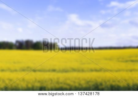 an agricultural field where they grow canola, summer time, Defocus
