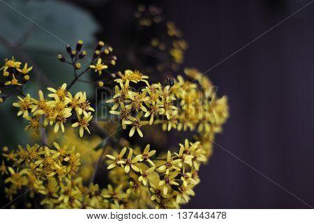 flor abeja color vida amarillo poeta verso