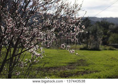 Naturaleza campo flores almendros hierba libertad lluvia
