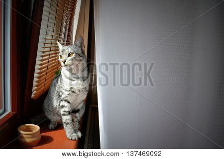 Cat sitting in the window looking out