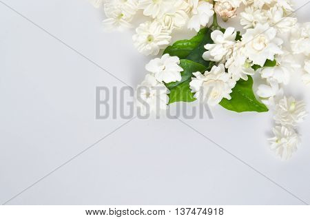 Jasmine Flowers Isolated On White Background Top View