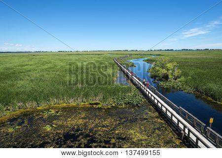 Point Pelee National Park Marsh Boardwalk in Canada