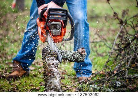 Lumberjack Worker In Full Protective Gear Cutting Firewood In Fo