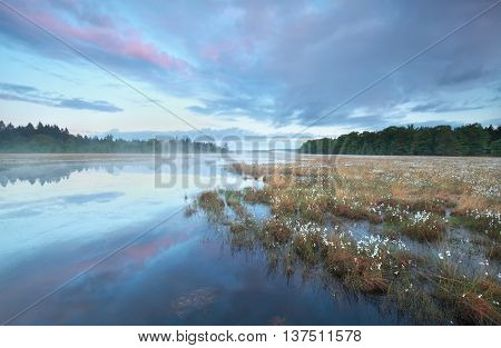 summer sunrise on wiald forest swamp Drenthe Netherlands