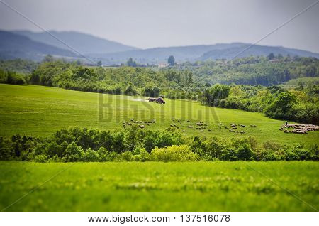 Agricultural Village Green Vitality Field In Springtime