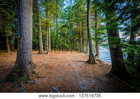 Trail Along Winnisquam Lake, At Ahern State Park, In Laconia, New Hampshire.