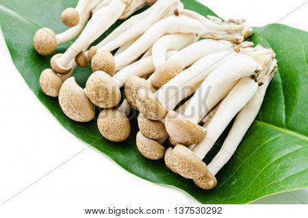 shimeji mushrooms brown varieties on green leaf isolated on white background