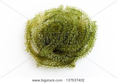 sea grapes or green caviar on white background