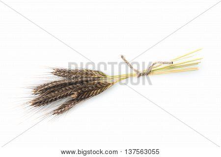 Enkir Triticum Monococcum