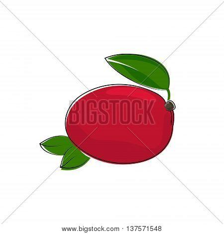 Red Mango Isolated on White Background, Tropical Fruit Mango, Vector Illustration