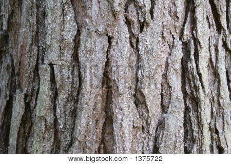 Pine Bark Horizontal Background