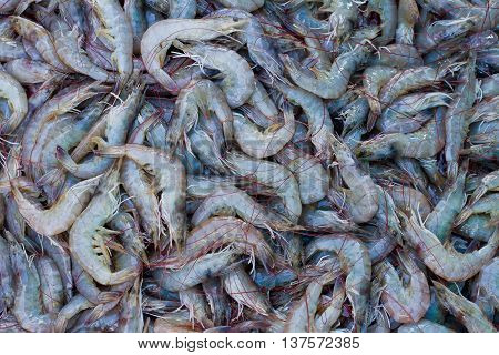 Close up of various kind of raw shrimps