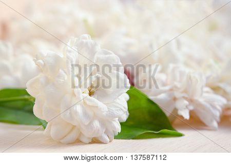 Jasmine Flowers Grouped On Wooden Board Background