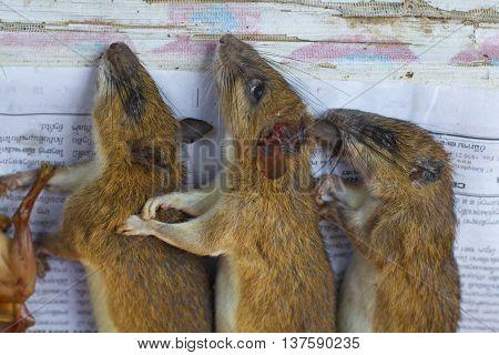 VANG VIENG Squirrels are sold at central city morning market in Vang Vieng Lao