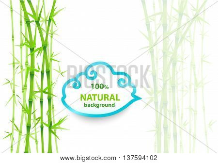 Bamboo asian backdrop. Bamboo background with copy space and clipping mask