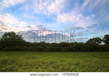 Sunrise in the forest. Trees in the meadow at dawn with clouds. Morning landscape.