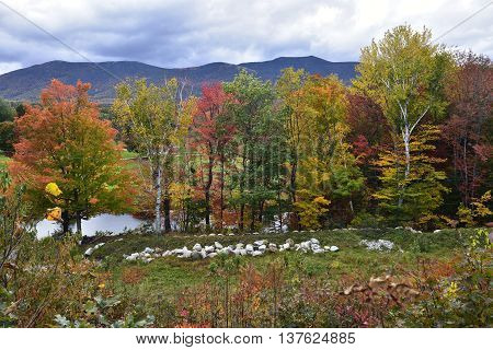 Fall trees in North Conway New Hampshire