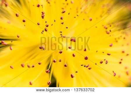 Closeup of stamens of a yellow flower
