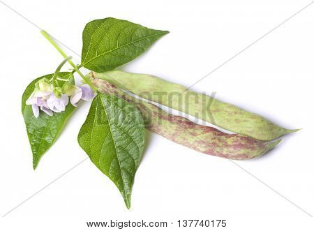 haricot pods with leaf and flowers isolated on white background