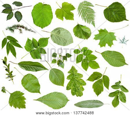 Various Green Leaves Isolated On White
