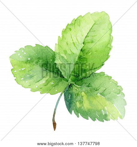 Single green strawberry leaf isolated on white background. Watercolor illustration
