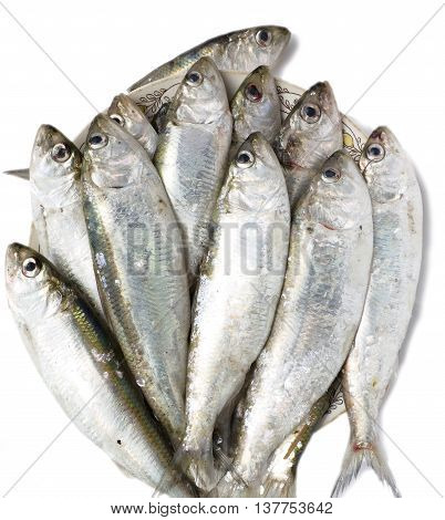 A lot of raw Azov shad (Alosa caspia tanaica) isolated on white background