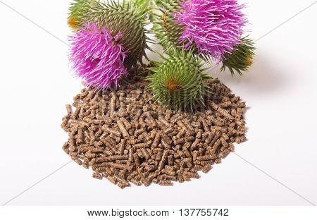 Granular And Fresh Thistle With Flowers. (silybum Marianum)