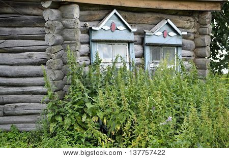 old wooden house which was overgrown with nettles hig