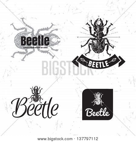 Vector black and white set with forest stag-beetle. The beetle as main element of logotypes on white background. Engraves vector design graphic element emblem logo sign identity logotype