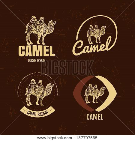 Vector black and white set with desert camel. The camel as main element of logotypes on brown background. Engraves vector design graphic element emblem logo sign identity logotype