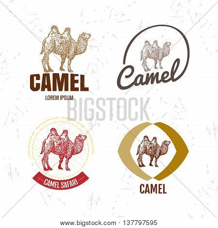 Vector colorful set with desert camel. The camel as main element of logotypes on white background. Engraves vector design graphic element emblem logo sign identity logotype