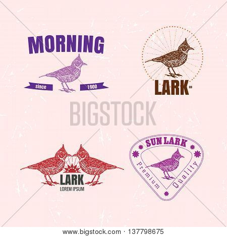 Vector colorful set with desert Crested lark bird. The lark bird as main element of logotypes on pink background. Engraves vector design graphic element emblem logo sign identity logotype