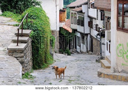 Stray dog in the narrow street of the town