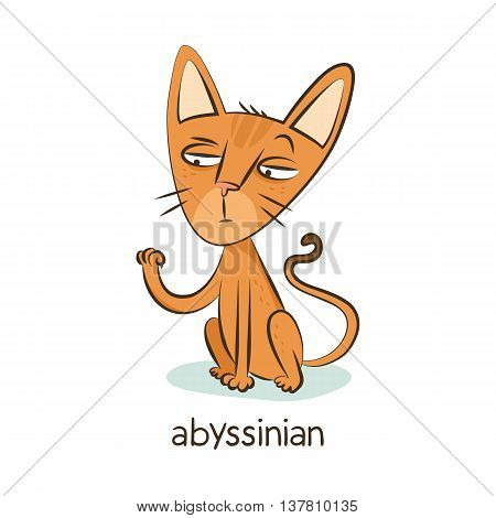 Abyssinian. Cat Character Isolated On White