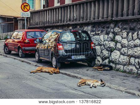 Sarajevo Bosnia and Herzegovina - August 23 2015. Stray dogs on the street in Sarajevo