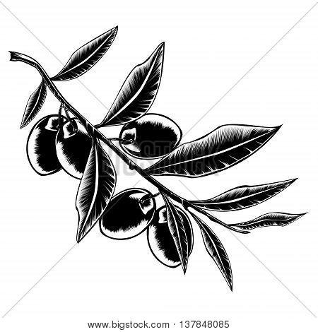 Olive branch with olives. Olive oil. Olive leaves