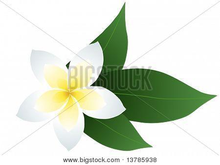 Vektor-Illustration Frangipani mit Blättern