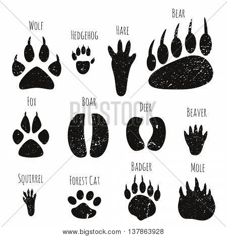 Vector set of forest animals black footprints.