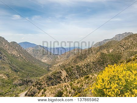 Wildflowers and the San Gabriel Mountains from the Jarvis Memorial Vista, on the Angeles Crest Scenic Highway (SR2), in the Angeles National Forest, California. poster